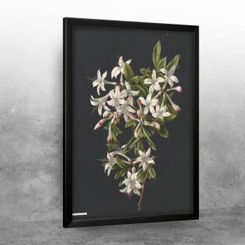 Vintage illustration of flowers