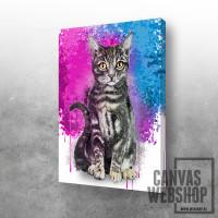 Cat in colour